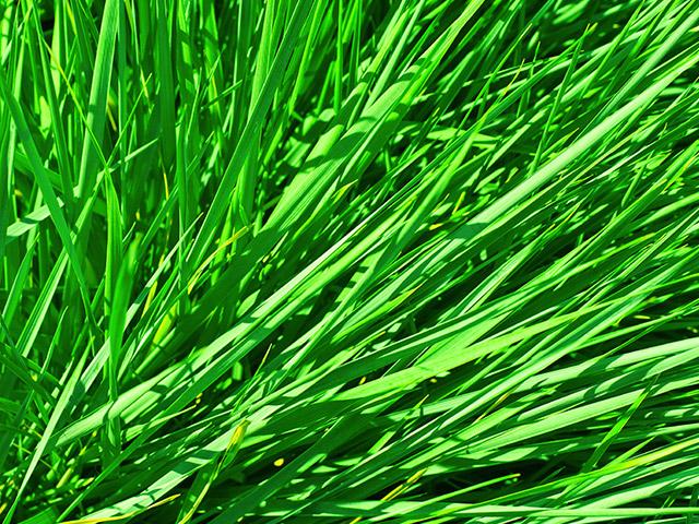 Grass & Fibres
